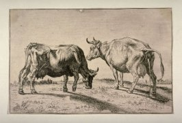 [Two cows]