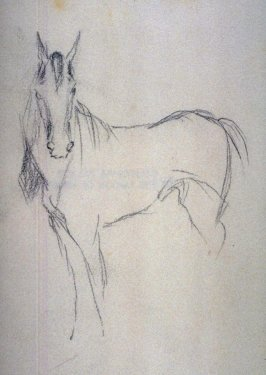 Sketch of a horse (side)