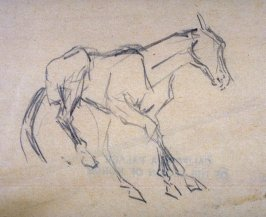 Sketch of a colt galloping