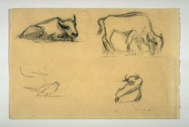 3 sketches of Buffalo & 1 of bird.