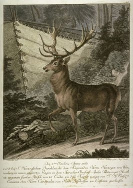The Stag with 18 Point Antlers