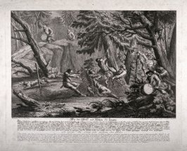 Capture of Wolves, using nets