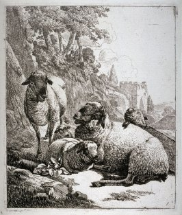 Group of Five Sheep