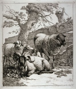 The Sheep at the Foot of A Tree