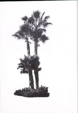 "Illustration 2, recto to ""Island at Hollywood Blvd. & La Brea Ave.,"" in the book A Few Palm Trees (Hollywood: Heavy Industry Publications, 1971)"