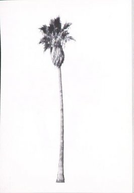 "Illustration 4, recto to ""5529 W. Sunset Blvd.,"" in the book A Few Palm Trees (Hollywood: Heavy Industry Publications, 1971)"