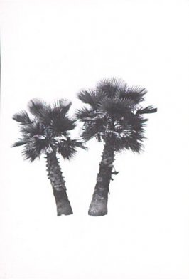 "Illustration 5, recto to ""S. W. corner of McCadden Pl. & Yucca St.,"" in the book A Few Palm Trees (Hollywood: Heavy Industry Publications, 1971)"
