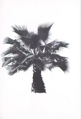 """Illustration 7, recto to """"N. W. corner of Valley Oak Dr. & Canyon Dr.,"""" in the book A Few Palm Trees (Hollywood: Heavy Industry Publications, 1971)"""