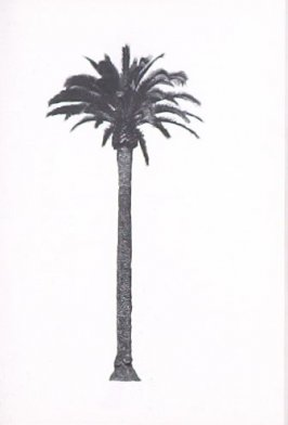"""Illustration 9, recto to """"N. W. corner of Doheny Dr. & Elevado Ave.,"""" in the book A Few Palm Trees (Hollywood: Heavy Industry Publications, 1971)"""