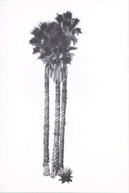 "Illustration 12, recto to ""N. E. corner of Arden Dr. & Elevado Ave.,"" in the book A Few Palm Trees (Hollywood: Heavy Industry Publications, 1971)"