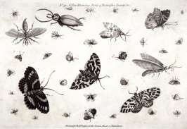 No. 51 A New Drawing Book of Butterflies, Insects, &c., seventy-third plate in the book, The Artist's Vade-Mecum (London: R. Sayer and J. Bennett, 1776)