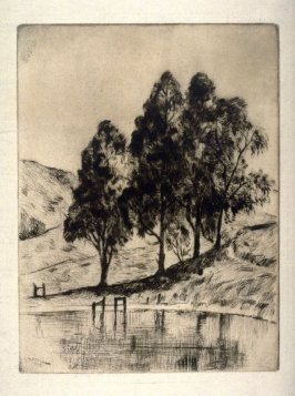 Eucalyptus Trees by the Water