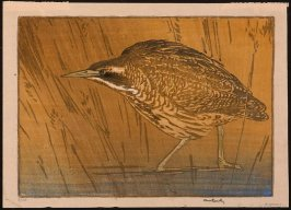 Untitled (Brown and Orange Bird Standing in Water)
