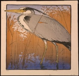 Untitled (Grey Heron Standing in Water)