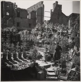 In the ruins of her former house, a woman grows food for her own consumption and for a modest profit. Frankfurt, 1947
