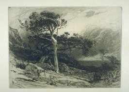 Old Cedars, Coast of Maine, plate 19 in the book, Choice Etchings (London: Alexander Strahan, 1887)