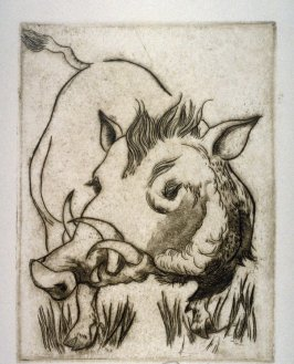 Untitled (Wild Boar)