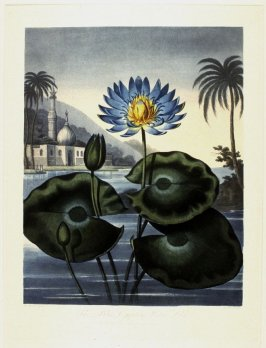 The Blue Egyptian Water Lily, from Thornton's 'The Temple of Flora or Garden of Nature'