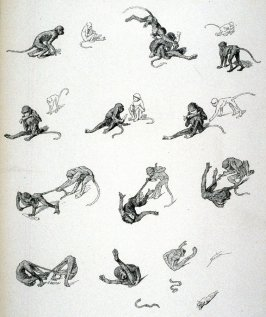 Two young apes and the tragedy of their tails, from Le Chat Noir