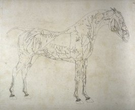 First of two plates for the First Anatomical Table of the Muscles, Fascias, Ligaments, Nerves, Arteries, Veins, Glands, and Cartilages of a Horse explained, which is the first plate in the book, The Anatomy of the Horse (London: printed by J. Purser, for