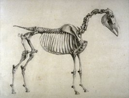 Second of two plates for the First Anatomical Table of the Skeleton of a Horse explained, which is the fourth plate in the book, The Anatomy of the Horse (London: printed by J. Purser, for the author, 1766)