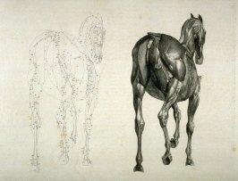 Plate for the Thirteenth Anatomical Table of the Muscles, Fascias, Ligaments, Nerves, Arteries, Veins, Glands, and Cartilages of a Horse, viewed posteriorly, explained, which is the twenty-first plate in the book, The Anatomy of the Horse (London: printed
