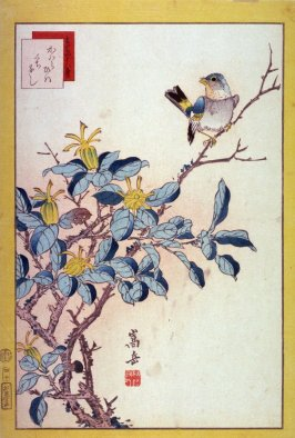River Sparrow and Kuchinashi Flowers (Kawara hiwa kuchinashi ),No. 40 from the series Forty-eight Birds Drawn from Life (Ikiutsushi yonjuhachiyo)