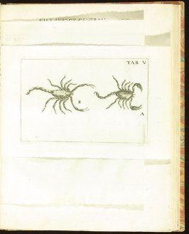 Plate 5 opposite page 144 in the book Historia insectorum generalis by Jan Swammerdam, Latin translation by H. Chr. Henninius ( Leiden: Jan van Abkoude, 1733)