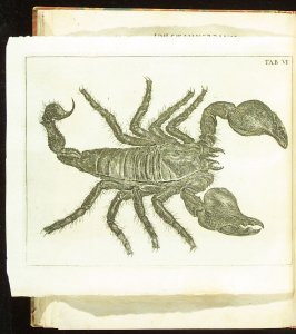 Plate 6 opposite page 147 in the book Historia insectorum generalis by Jan Swammerdam, Latin translation by H. Chr. Henninius ( Leiden: Jan van Abkoude, 1733)
