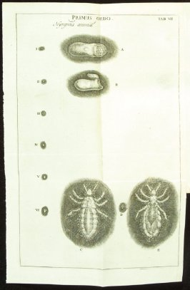 Plate 7 opposite page 169 in the book Historia insectorum generalis by Jan Swammerdam, Latin translation by H. Chr. Henninius ( Leiden: Jan van Abkoude, 1733)