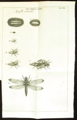 Plate 8 opposite page 174 in the book Historia insectorum generalis by Jan Swammerdam, Latin translation by H. Chr. Henninius ( Leiden: Jan van Abkoude, 1733)