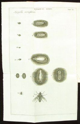 Plate 11 opposite page 189 in the book Historia insectorum generalis by Jan Swammerdam, Latin translation by H. Chr. Henninius ( Leiden: Jan van Abkoude, 1733)