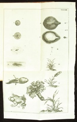 Plate 12 opposite page 194 in the book Historia insectorum generalis by Jan Swammerdam, Latin translation by H. Chr. Henninius ( Leiden: Jan van Abkoude, 1733)