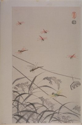 Dragonflies over Rice Fields, Autumn, no. 1 from a series of six, Collection of Insects