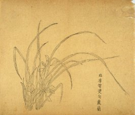 """""""Cluster of Orchids in Clearing Weather"""", No.25 from the Volume on Orchids - from: The Treatise on Calligraphy and Painting of the Ten Bamboo Studio"""