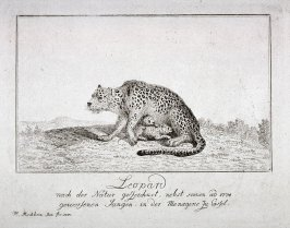 Leopard with her Whelps