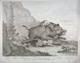 Wild Boar hunted by dogs