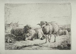 Group of 3 sheep and one ram in landscape