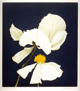Matilija Poppy, pl. 2, from the portfolio, Poppies and Peony