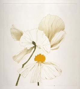 Working proof 1 for Matilija Poppy, pl. 2, from the portfolio, Poppies and Peony