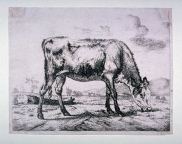 A Calf in the Pasture