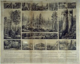 The Mammoth Tree Grove, Calaveras County, California, and its Avenues