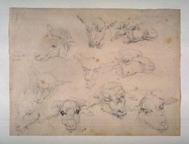Studies of Heads of Sheep
