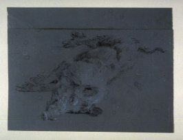 Recto: Study of a dead boarVerso: Anatomical studies and notations