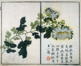 Chrysanthemum - from: The Mustard Seed Garden Manual of Painting, Volume II (on Orchids, Bamboo, Plums and Chrysanthemums)