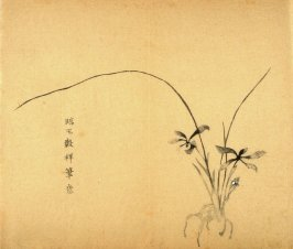 Orchid With Root, No.26 from the Volume on Orchids - from: The Treatise on Calligraphy and Painting of the Ten Bamboo Studio
