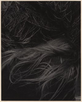 Untitled (Hair and Branches)