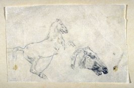 [Rearing horse & horses head]- One from the Studies and Sketches for the Murals in the New Amsterdam Theatre, New York