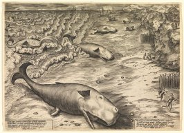 Whales Stranding at Ter Heyde