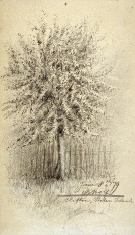 Sketchbook; tree